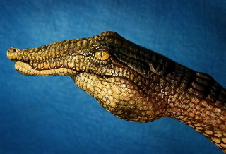Alligator Hand Art
