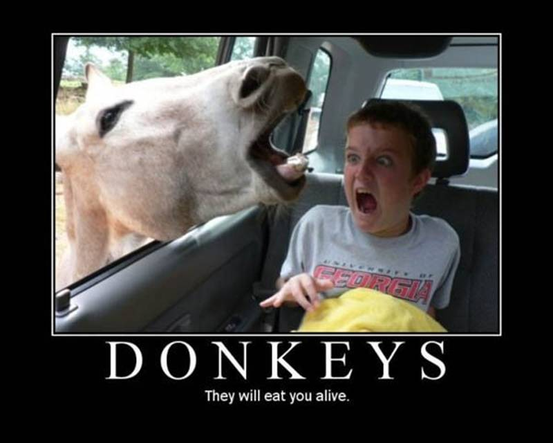 Donkey Demotivational Poster