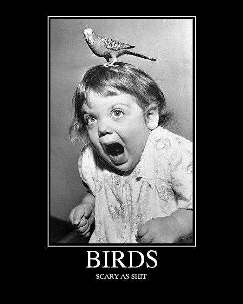 Birds Demotivational Poster