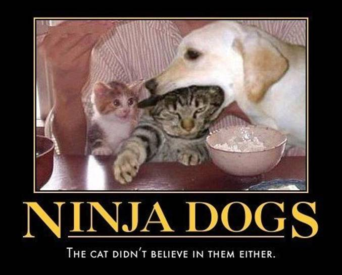Ninja Dog Demotivational Poster