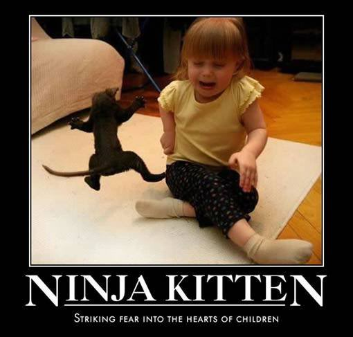 Ninja Kitten Demotivational Poster