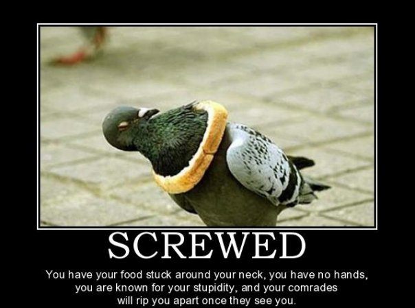 Pigeon Demotivational Poster