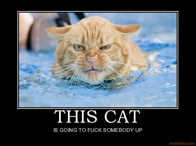 Angry Cat DeMotivational Posters