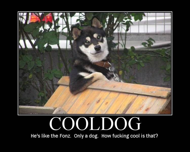Cool Dog DeMotivational Posters