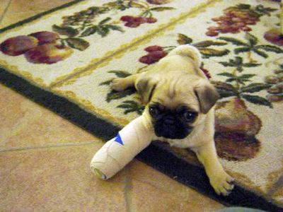 Dog in a Cast