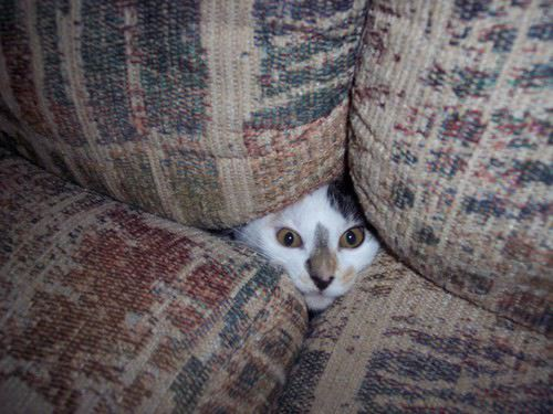 Kitten in Couch Cushions