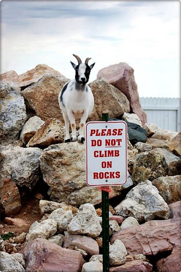 Mountain Goat No Climbing Sign