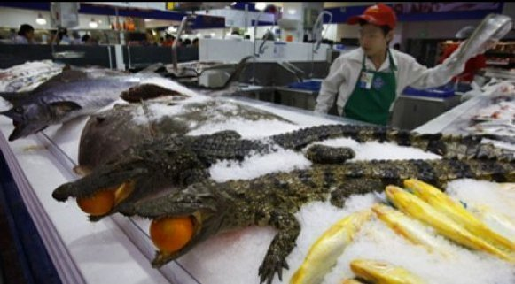 alligators in China Wal Mart