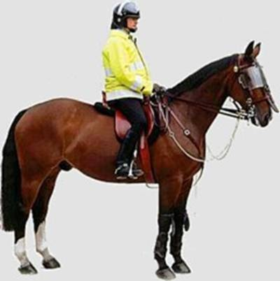 policeman on horse
