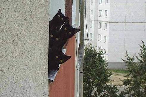 cats peeking around wall