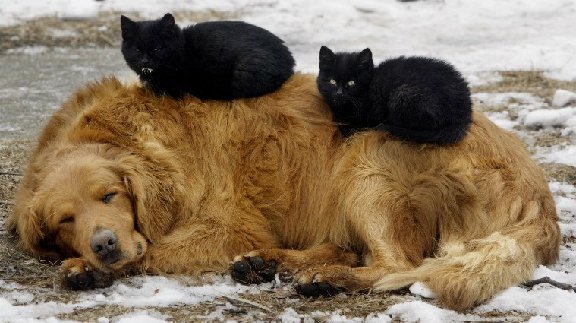cats sleeping on sleeping dog