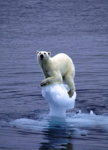 polar bear on melting iceberg