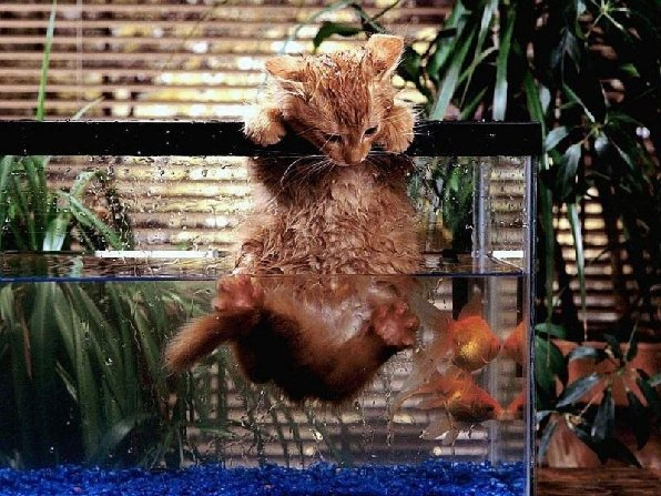 kitten in aquarium