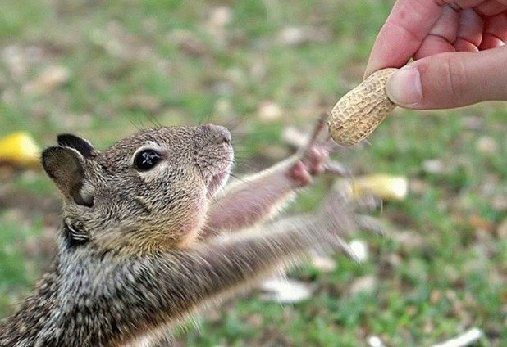 squirrel handfed peanuts