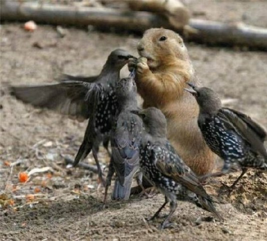 birds eating from gopher