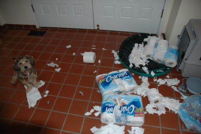 Puppy attack of paper towels