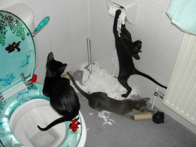 Kitties destroying toilet paper