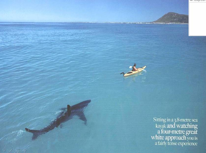 Shark following kayaker